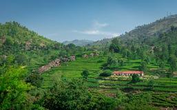 Odosobneni domy w pogórzach zachodni ghat z trójnikiem uprawiają ogródek zdjęcie royalty free