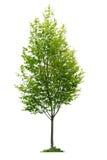 odosobneni drzewni potomstwa Fotografia Royalty Free