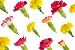 Odosobneni jaskrawi łąka kwiaty Fotografia Stock