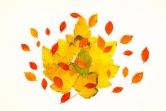 Odosobneni kolorów żółtych liście Obraz Royalty Free