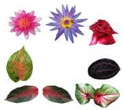 Odosobneni kwiaty i liście na białym tle Obrazy Stock