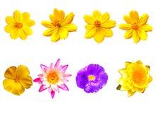 Odosobneni kwiaty na białym tle zdjęcia royalty free