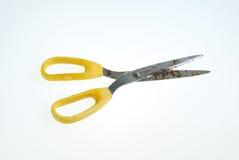 Odosobneni ośniedziali nożyce na bielu Fotografia Stock