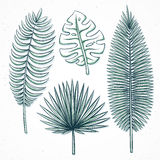 Odosobneni palmowi liście handmade w nakreślenie stylu Zdjęcie Royalty Free