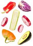 Odosobneni plasterki warzywa spada rżnięte cebule, bania, kukurudza, avocado, dzwonkowy pieprz i czerwona kapusta, ilustracji
