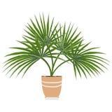 Odosobneni przedmioty salowe rośliny w akwareli projektują Zdjęcie Stock
