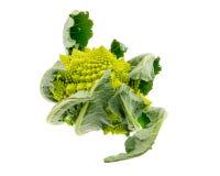 Odosobneni Romanesco brokuły Fotografia Stock