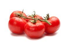 odosobneni soczyści pomidory fotografia stock