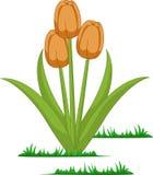 Odosobneni tulipanów kwiaty wektorowi royalty ilustracja