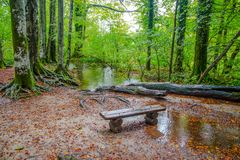 Odosobniona drewniana ławka w lesie w jesieni, /beanch/ forest/wood/jesień obrazy royalty free