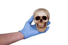 odosobniona istoty ludzkiej czaszka Zdjęcie Stock