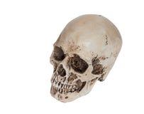 Odosobniona ludzka czaszka na bielu Zdjęcia Royalty Free
