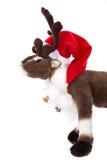 Odosobniona miękkiej części zabawka: Reniferowy Rudolph z czerwonymi bożymi narodzeniami kapeluszowymi Obraz Stock