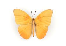 odosobniona motyl pomarańcze Obrazy Stock