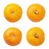 odosobniona pomarańczowa bania Fotografia Stock