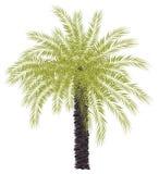 Odosobniona zielona drzewko palmowe ilustracja ilustracja wektor
