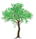 Odosobnionej lato zieleni drzewna ilustracja dla wielkiego formata druku ilustracja wektor