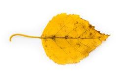 Odosobniony Żółty jesień liść Obrazy Stock