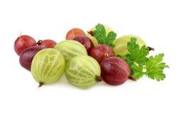 Odosobniony agrest Zielony i czerwoni agresty odizolowywający na bielu Zdjęcie Stock