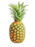 odosobniony ananas Obrazy Stock