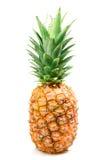 odosobniony ananasowy dojrzały Fotografia Stock
