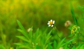 Odosobniony biały kwiat w ulistnienia tle Obrazy Stock