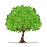 Odosobniony cienia drzewo na białym tle Zdjęcie Stock