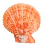 Odosobniony colorfull seashell na białym tle Zdjęcia Royalty Free