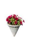 Odosobniony czerwony kwiat w garnku Obrazy Stock