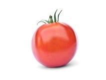 odosobniony czerwony pomidor Zdjęcie Stock