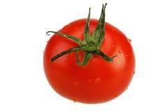 odosobniony dojrzały pomidor Zdjęcie Stock