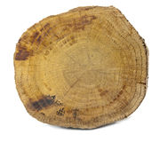 odosobniony drewno Zdjęcia Stock