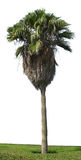 odosobniony drzewko palmowe Obrazy Stock