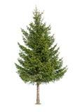 odosobniony drzewny biel Zdjęcia Royalty Free