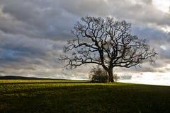 odosobniony drzewo Zdjęcie Royalty Free