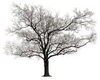 odosobniony drzewo Obrazy Stock