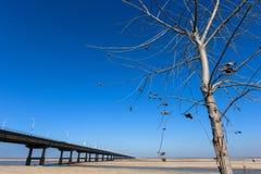 Odosobniony drzewo i most z niebieskim niebem Fotografia Royalty Free