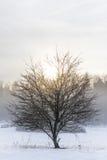 Odosobniony drzewo i zima zdjęcia royalty free
