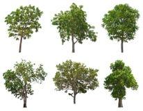 Odosobniony drzewo na białym tle obrazy stock