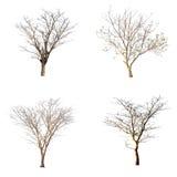 Odosobniony drzewo na białym tle Zdjęcie Stock