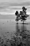 Odosobniony drzewo w czarny i biały Obraz Stock
