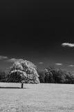 Odosobniony drzewo w czarny i biały Zdjęcie Royalty Free