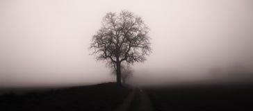 Odosobniony drzewo w mgle otaczaj?cej tajemniczym ponuractwo krajobrazem obrazy stock