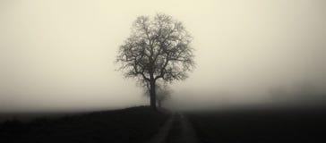 Odosobniony drzewo w mgle otaczaj?cej tajemniczym ponuractwo krajobrazem zdjęcie stock