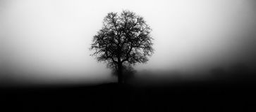 Odosobniony drzewo w mgle otaczaj?cej tajemniczym ponuractwo krajobrazem fotografia royalty free