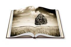 Odosobniony drzewo w Tuscany wheatfield Rozpieczętowany photobo - Włochy - zdjęcie stock