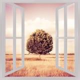 Odosobniony drzewo w Tuscany wheatfield widoku od okno - przeciw Zdjęcia Stock