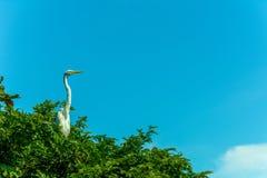 Odosobniony duży biały ptak na drzewie Zdjęcie Stock
