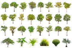 Odosobniony duży drzewo na białym tle kolekcja drzewa fotografia royalty free