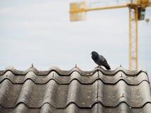 Odosobniony gołąb na brudnym dachu zdjęcie stock